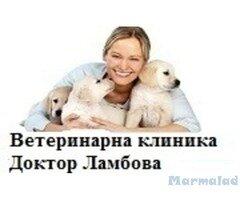 Ветеринарна клиника Д-р Ламбова
