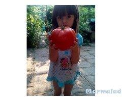 Домати семена розови и червени домати