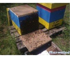 Продавам оплодени пчелни майки