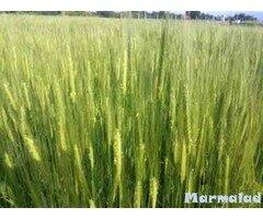 Земеделска земя в с. Борово