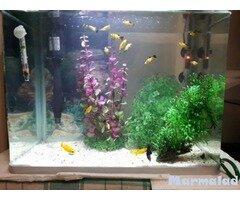 Продавам оборудван аквариум