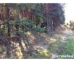 Парцел с борова гора във вилната зона Костандово